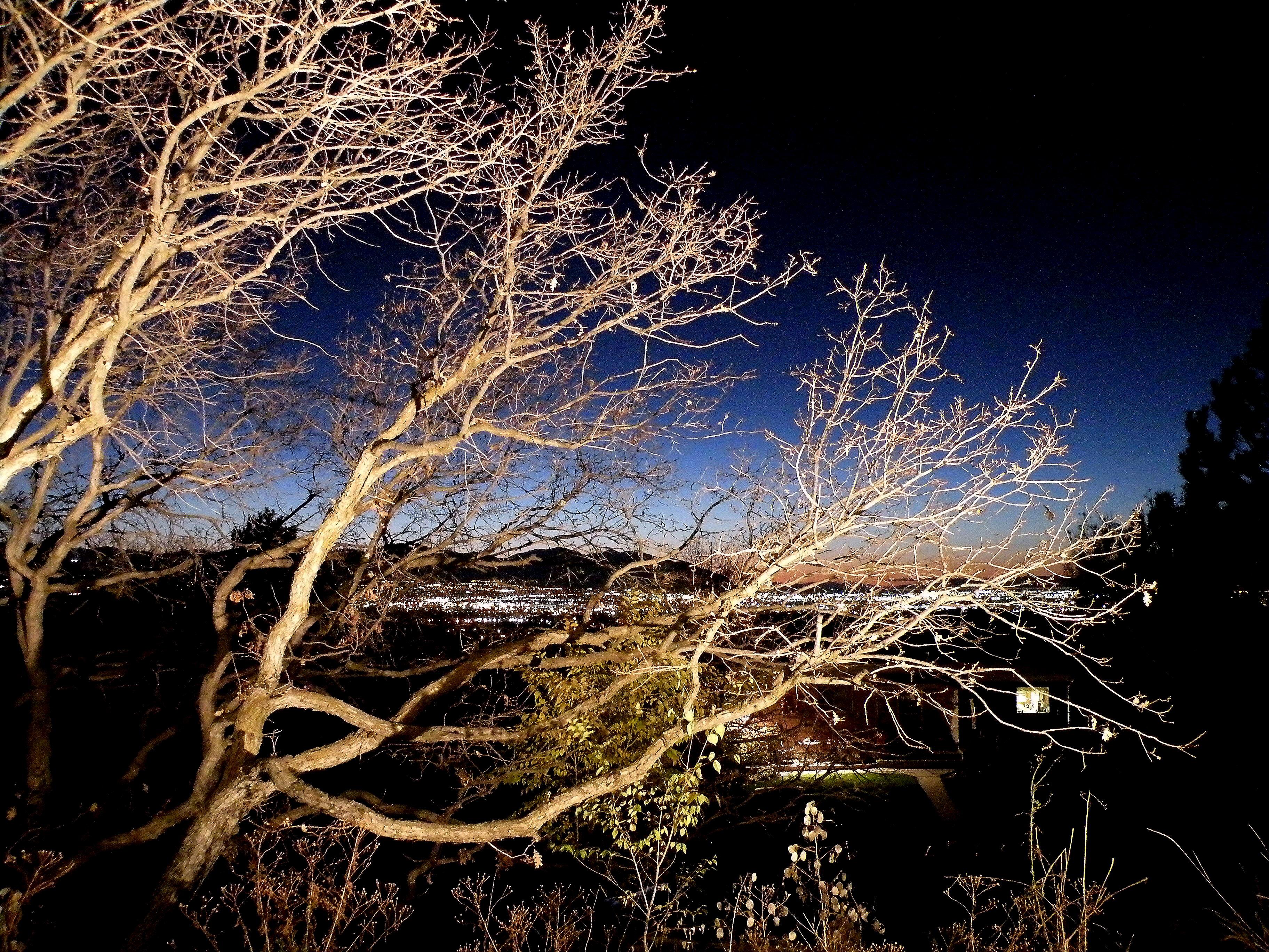 Gambel oaks overlook the Salt Lake Valley. Erin Alberty|The Salt Lake Tribune