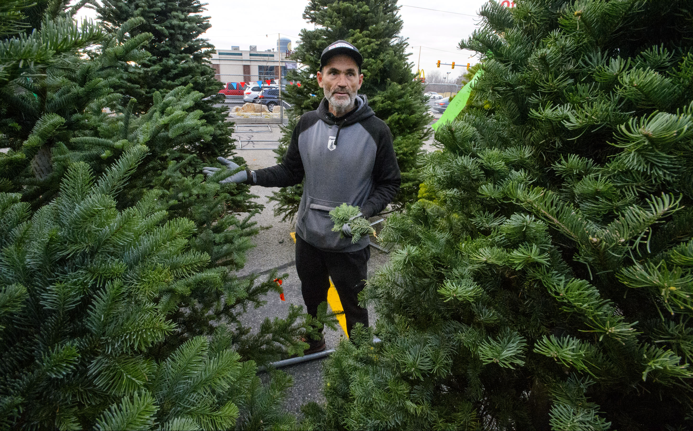 Christmas trees may be harder to come by in Utah this year due to regional shortage