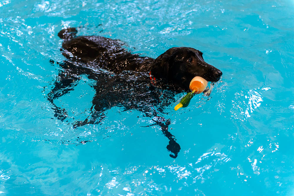 Wanna Take Your Dog For A Swim Head For Utah S First Canine Aquatic Center Shawn Miller
