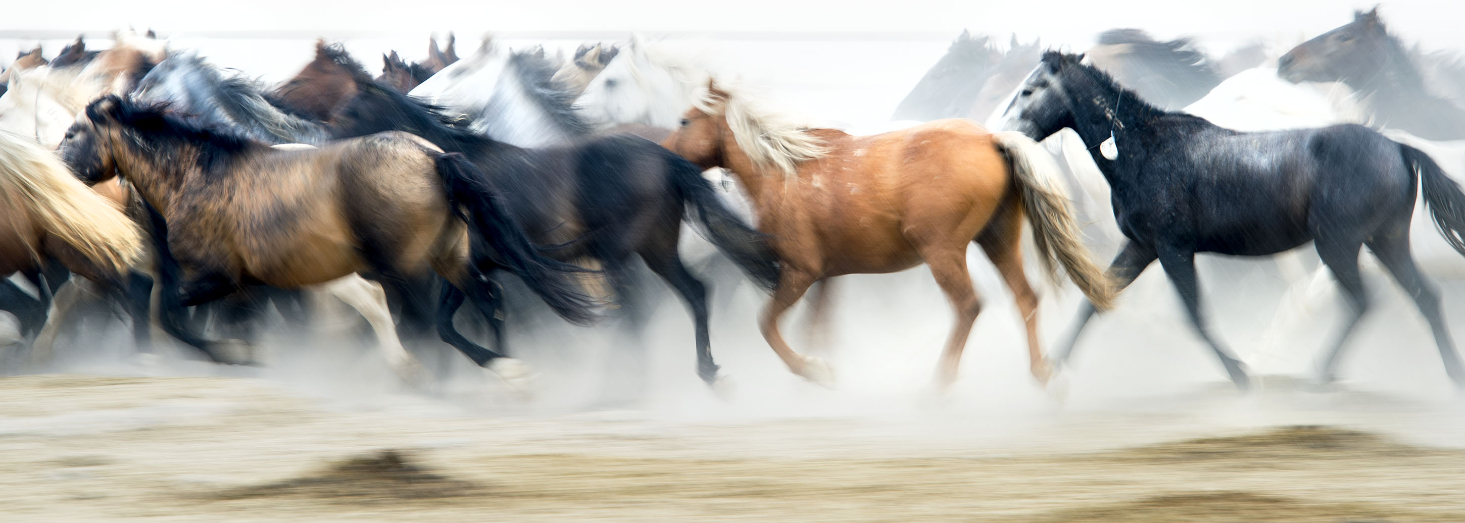 (Steve Griffin  | Tribune file photo)   Wild horses are cared for in the BLM's new off-range contract wild horse corral, located on a 32-acre private ranch in Axtell, Utah Monday, September 14, 2015.  Over 500 wild horses currently are housed at the facility, including the 170 wild horses associated with the Wheeler Pass Herd Management Area Emergency Gather near the Cold Creek area of Southern Nevada.
