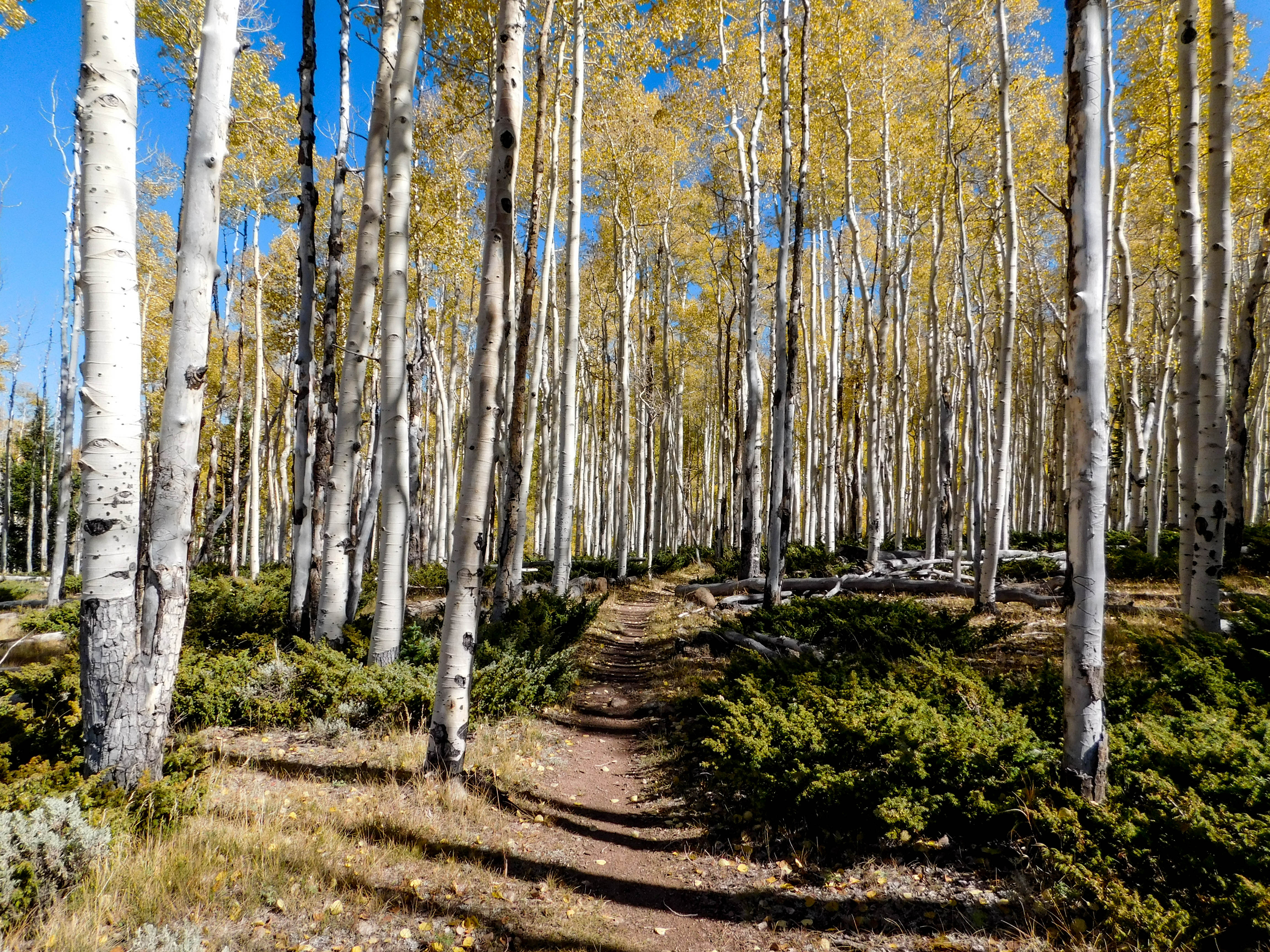 Hike to the Pando overlook via Lakeshore National Recreation Trail at Fish Lake for a glimpse of the world s most massive known living thing