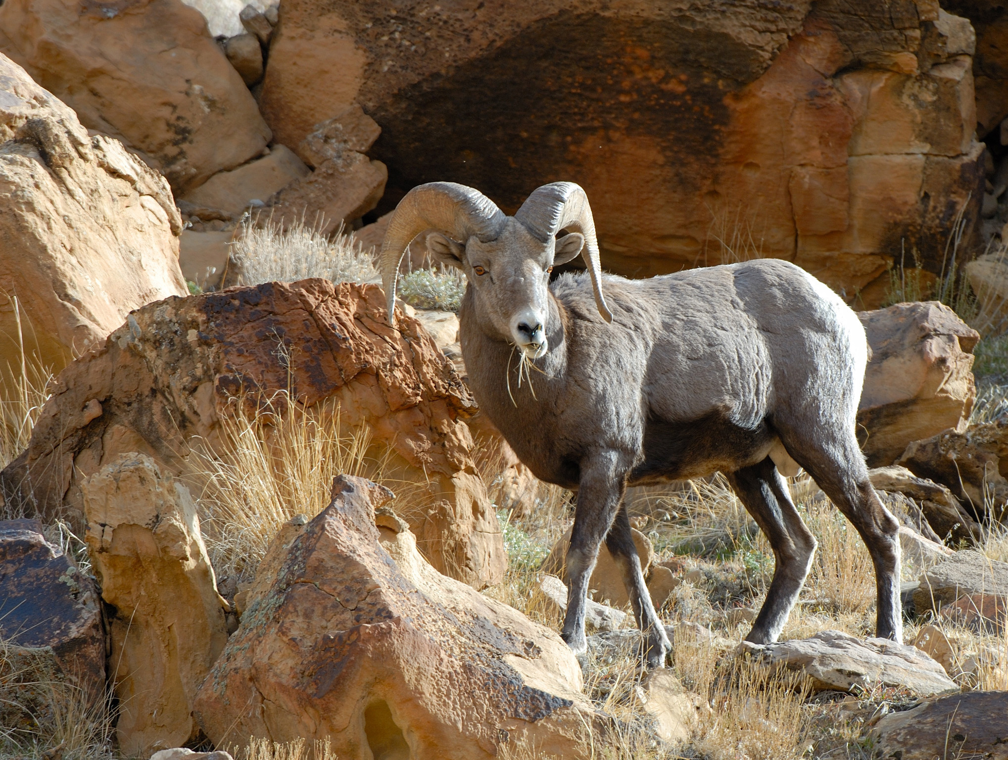 Deadline nears for Utah's big game hunting permits