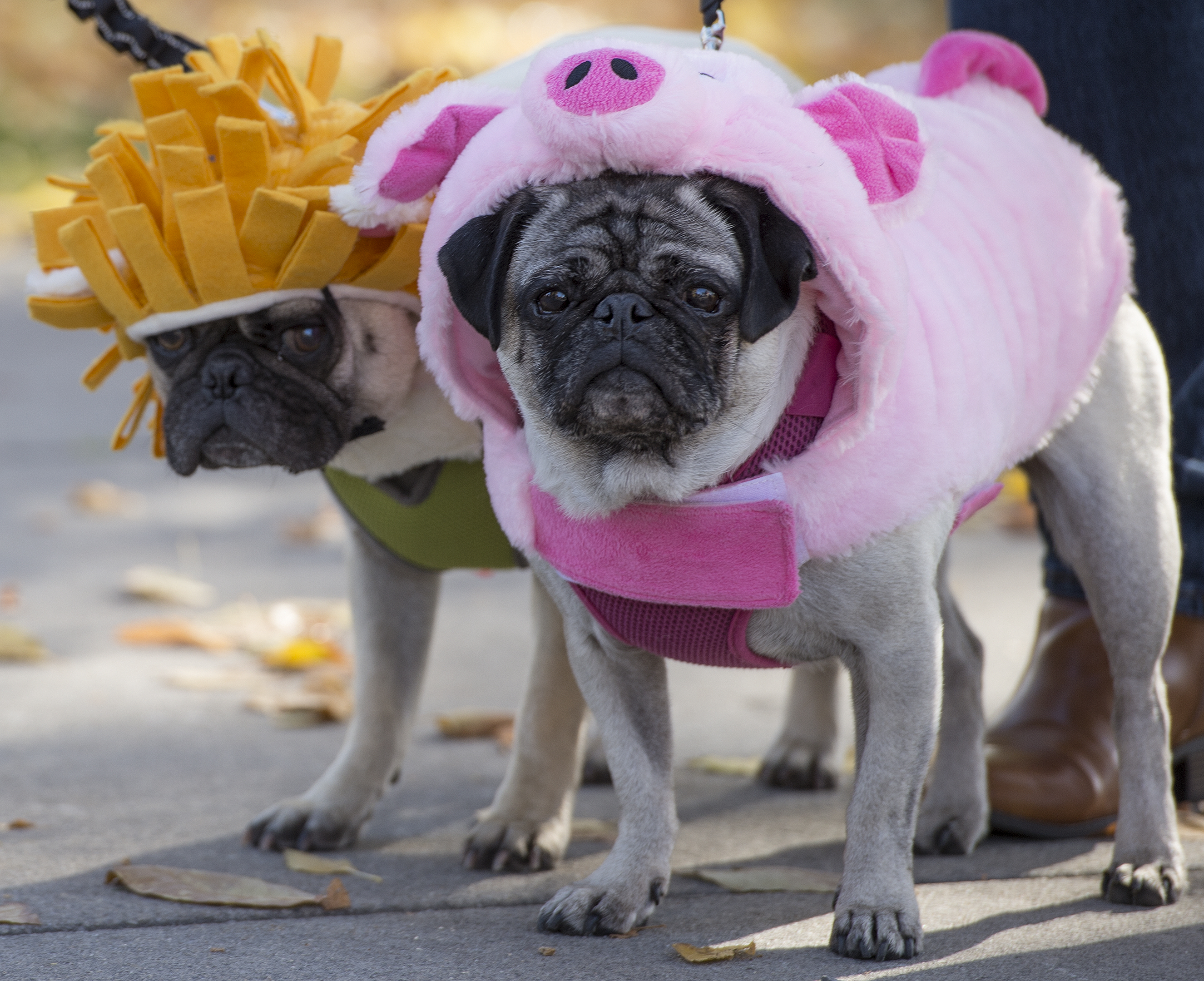 Downtown Farmers Market ends Saturday with a Howl-o-ween costume contest for pets, pumpkin decorating for kids and fall vegetables for everyone